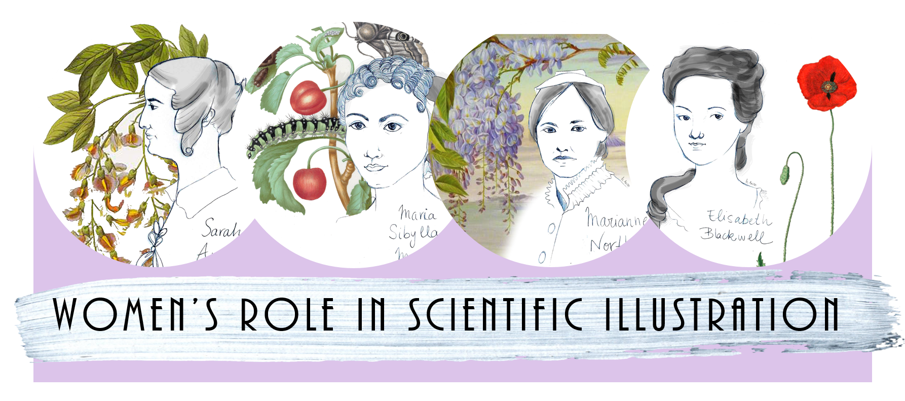 Women Scientific Illustrators