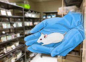 Laboratory mouse, 2018
