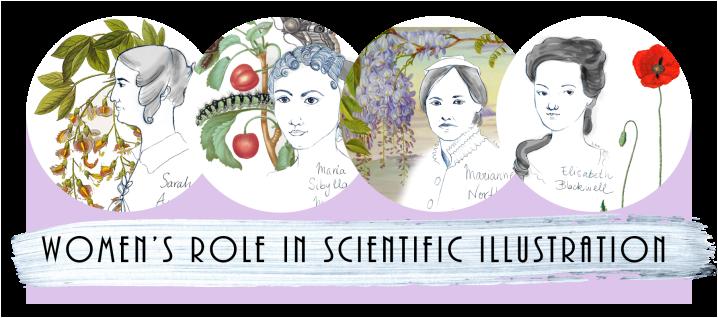 Women's role in scientific illustration, 2018
