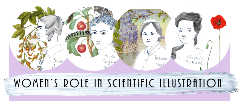 Women's role in scientific illustration, 2018